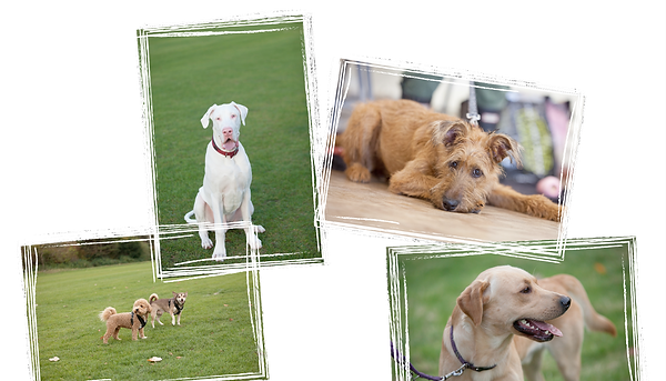 happy dogs trainig