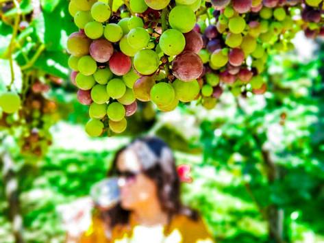 Conhecendo o Wine Experience da Casa Valduga em Bento Gonçalves/RS