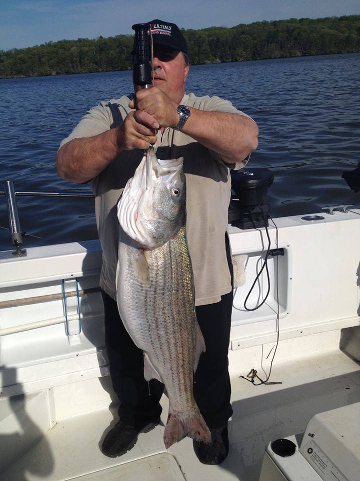 Hudson River Striper May 2015