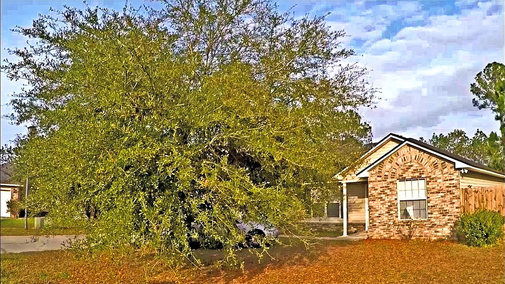 Tree Service in Euless, TX tree removal, tree trimming, stump removal, pruning, brothers landscape services, hurst, bedford, tree climbing, tree maintenance, landscaping, landscaper