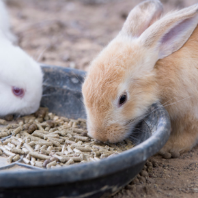 A healthy rabbit meal planner for 2021
