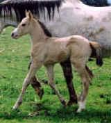 Baby Buckwheat.jpg