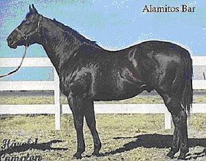 Alamitos Bar.jpg