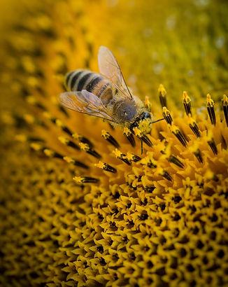 bee-beehive-blur-211467.jpg