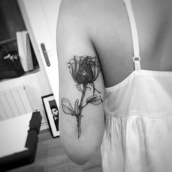 TATTOO ROSE OMBRAGE