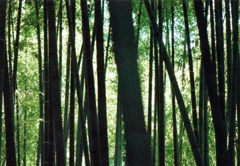 仏教の森 Buddhist Forest