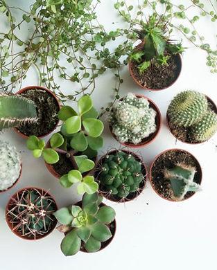 cactus.webp