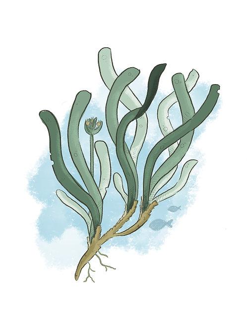 Adoptiere Posidonia oceanica