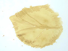 Drawing using mulberry leaf ink