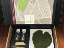 Botanical ink drawing workshop postal packs