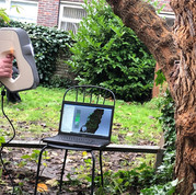 Scanning the trunk of the mulberry tree at St Margaret's House