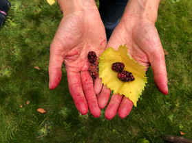 Berries can stain your hands and clothes