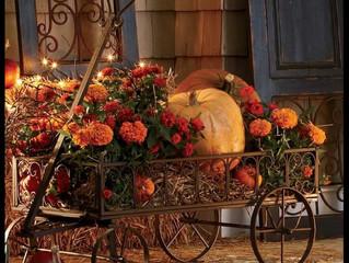 Autumn Bliss ...