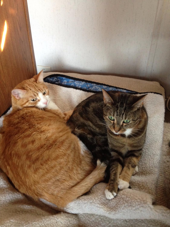 Dobby & Tiki