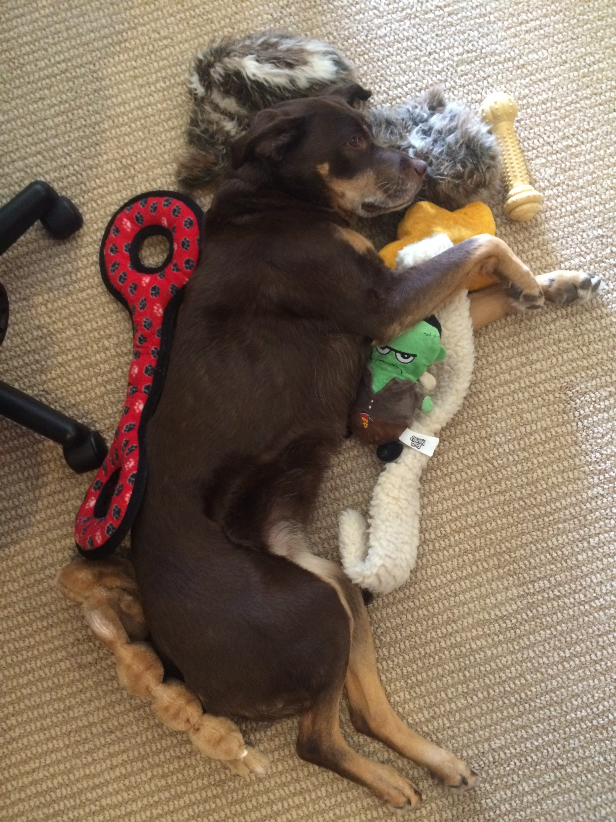 Nala & Her Toys