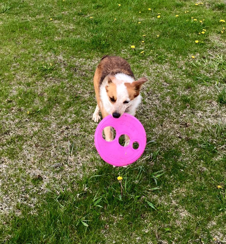 Roxy & Her Frisbee