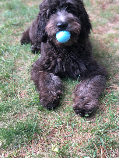 Scout with ball.JPG