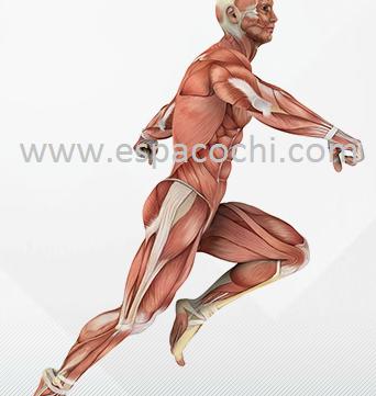 Dor na coluna vertebral e o benefício do treinamento funcional