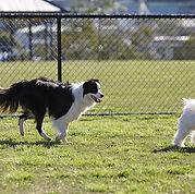 Erno Beach - Area sgambettamento cani