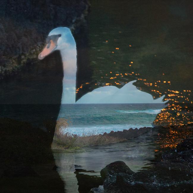 Ocean in the Swan