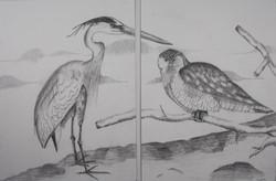 Bird Diptych