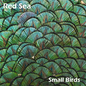 Small Birds Eras 122.png