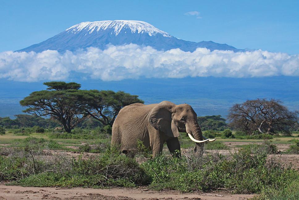Amboseli-Elephant-with-Views-of-Mt-Kilim