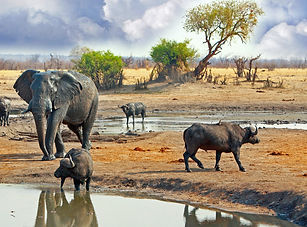 Elephant-and-buffalo-at-waterhole-in-Hwa