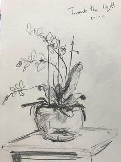 orchid-light