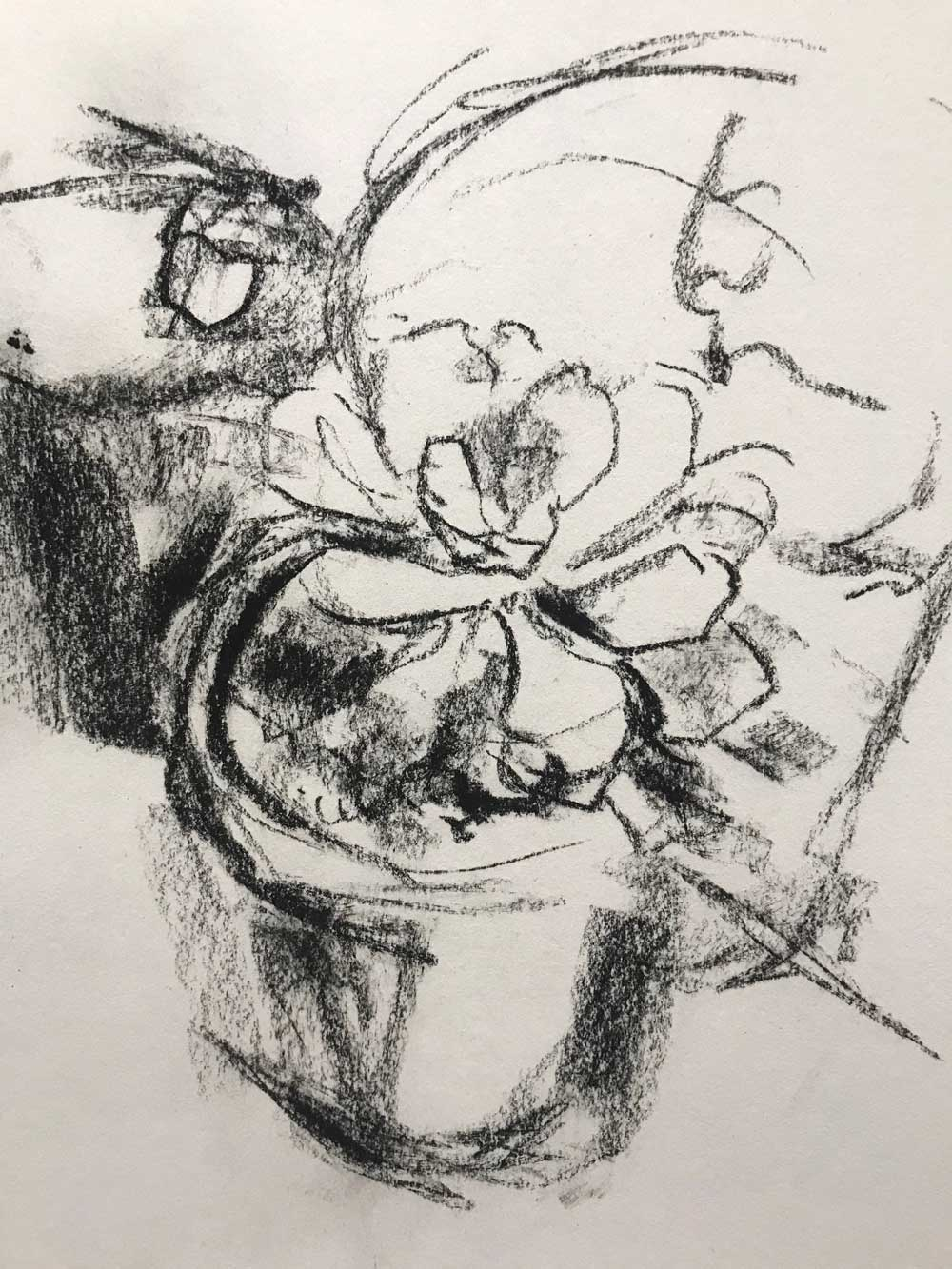 succulent-study