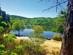 Forest View Carp Fishing Lake