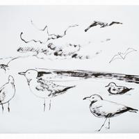 Gulls at Coney Island