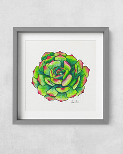 Succulent-RedTips-GreyFrame-Square-1000p