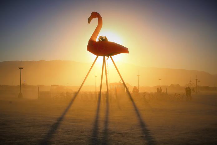 Flamingo1-sized.jpg