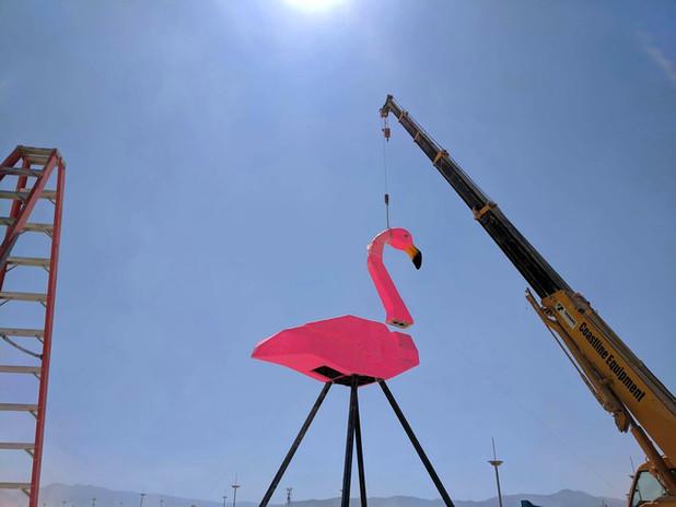 Flamingo-14.jpg
