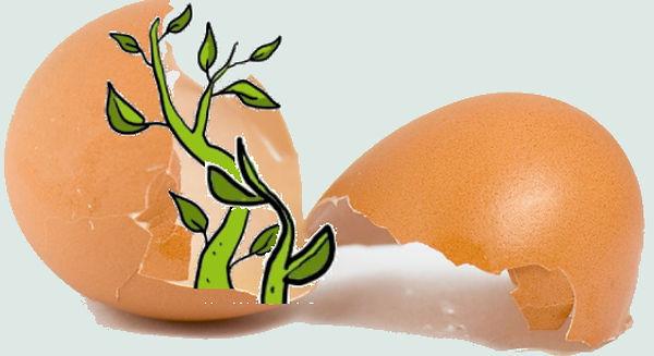 ei voor ws2.jpg