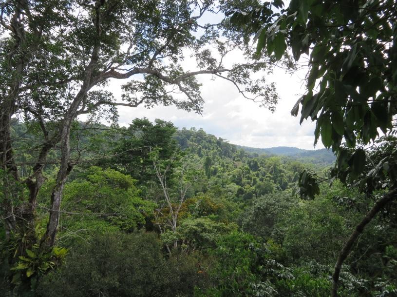 vue depuis la canopée