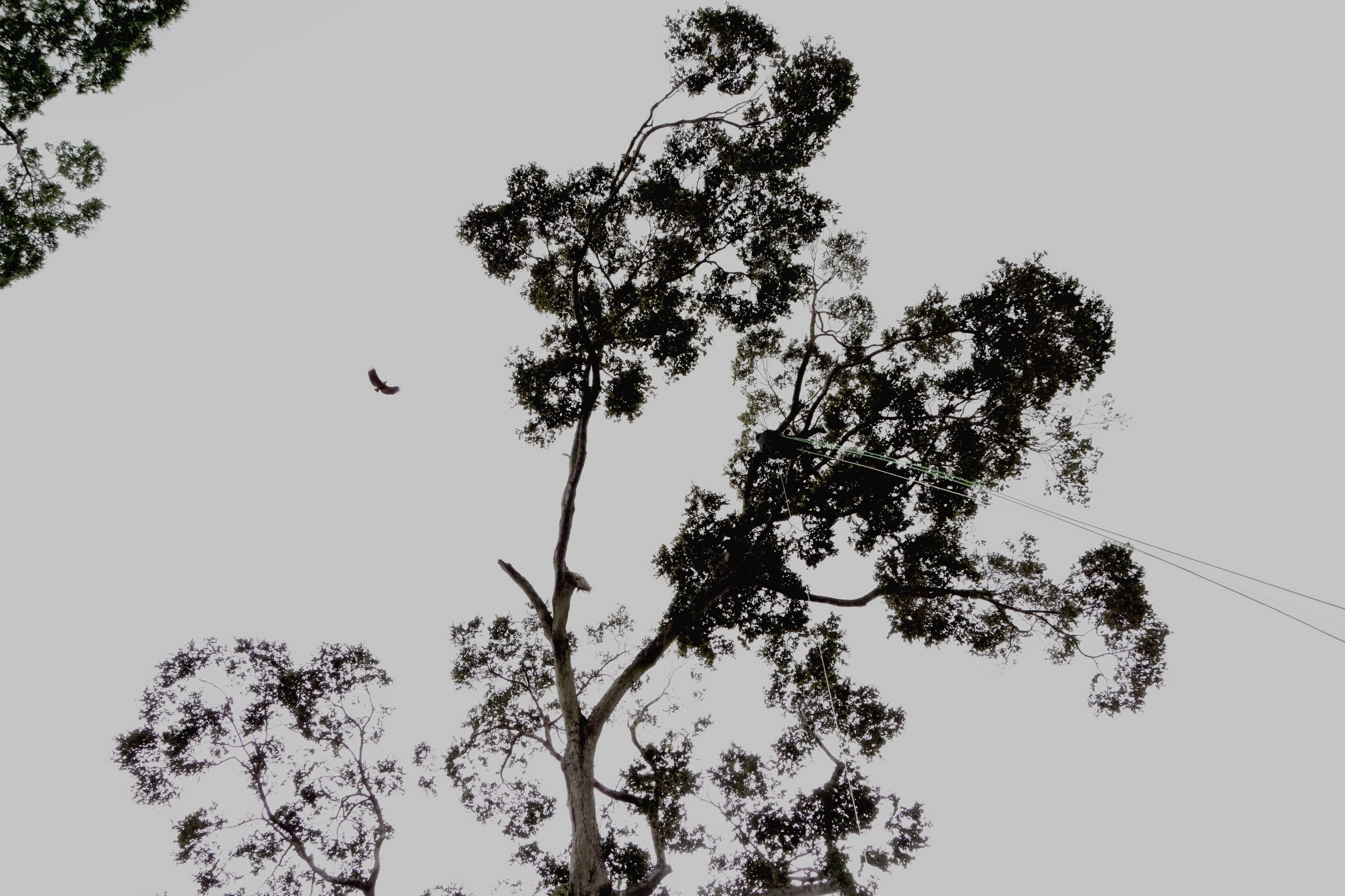 La buse le nid et la grimpeuse