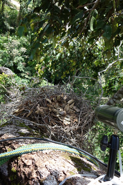 camera braquée sur nid