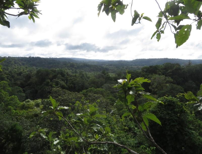 vue depuis cet arbre (46m)