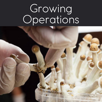 Growing Operations
