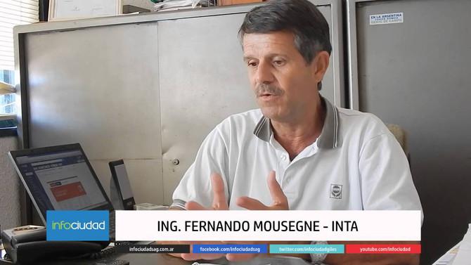 """Fernando Mousegne: """"Siempre es un atractivo lo relacionado a comportamiento de híbrido"""""""