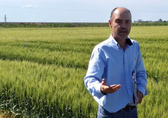 """Gustavo Ferraris: """"Los nutrientes manifiestan una fuerte interacción con la condición hídrica"""""""