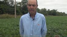 """Ferraris: """"La soja desde hace bastante tiempo dejó de ser el cultivo extensivo y de bajo costo"""""""