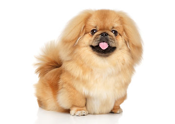 Website-home page-dog.jpg