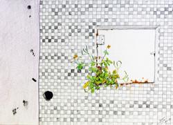 꽃 피는 문_color pencil and pencil on paper_ 18.0x25.0cm_ 2015