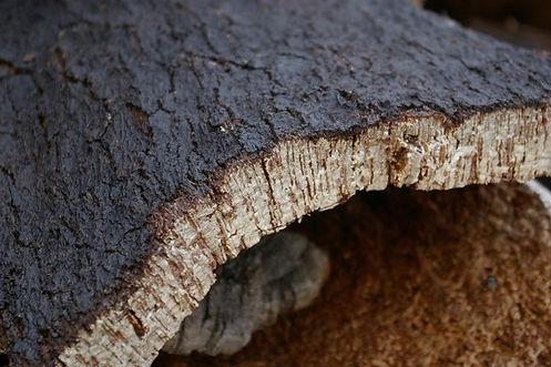 Cork_017.jpg