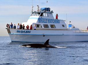 redondo-beach-whale-watching-boat-1024x6