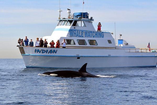 Redondo Beach Whale Watching Boat