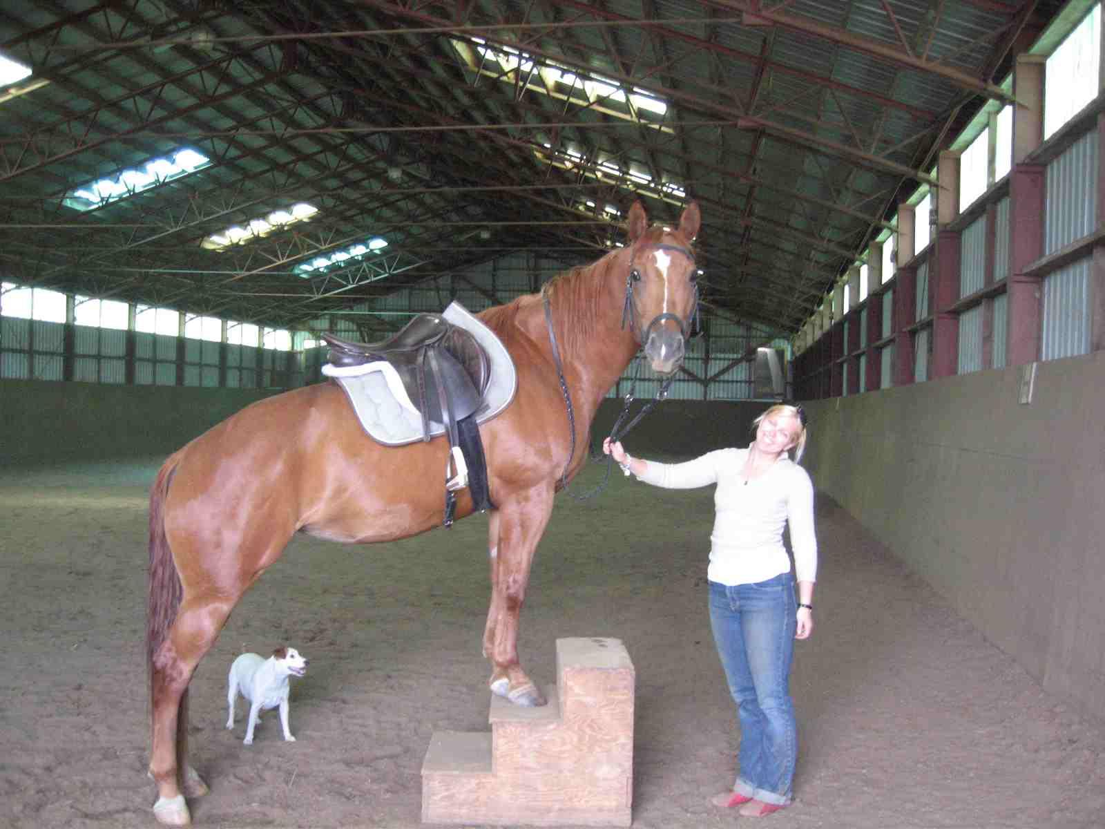 Horsemanship \ Éthologie